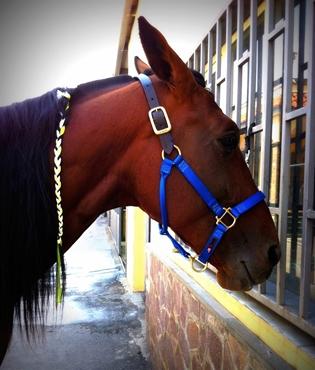 Immagine per la categoria Saldi Cavallo