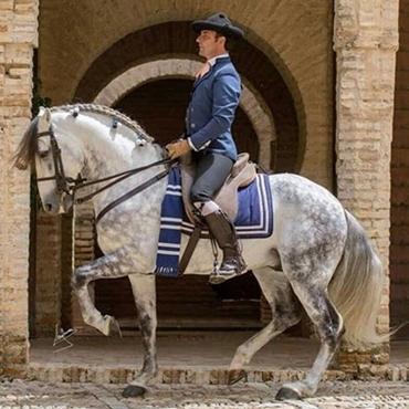 Immagine per la categoria Monta spagnola e altre